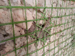 Gli Interventi Per Rendere Una Casa Antisismica Ingegnere Andrea